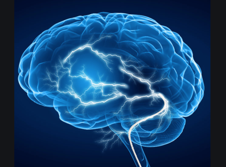 A vector image of a brain